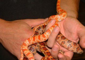 Reptile Handling Slough